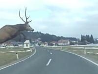 野生の鹿さんの身体能力が凄い。長距離走った後に2車線道路を軽く飛び越えてしまう。
