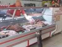 肉屋のおっさんとニャンコのやりとりが可愛すぎるwwwほのぼの動画。
