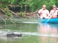 みんなが楽しむ湖にワニを泳がせてみたという少し危険なイタズラの映像。