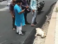インドで寝ているまに道路の一部にされてしまったワンちゃんがみつかる(´・_・`)