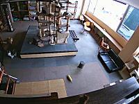 猫カフェの防犯カメラが捉えた高槻地震が起きた時のネコたちの反応。