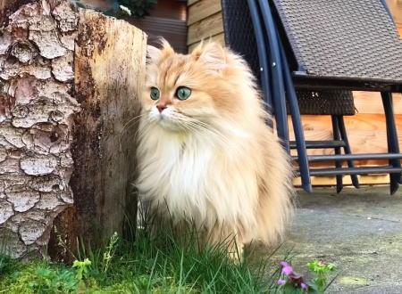 家猫の初体験。はじめて庭に出ることを許されたネコちゃんの反応がカワイイ。