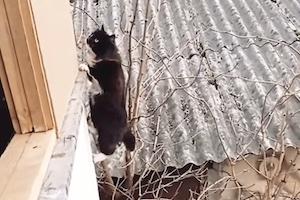 【ネコ】部屋に戻るために毎回難しいルートを辿るという猫ちゃんの映像。
