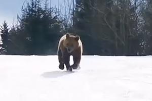 スキー場で遭遇したクマさんを他の客から遠ざけるインストラクターGJ動画。