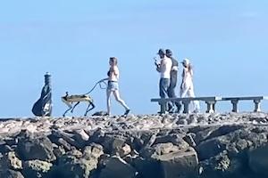 ボストンダイナミクスのロボットを散歩させている女性が見つかる。