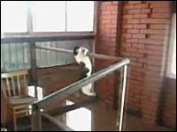ニャンコの反射神経、身体能力すごすぎ驚いた動画。鳥を捕まえるネコさん