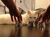 このネコすごい。カップの中のボールを当てるシェルゲームが得意なネコ。