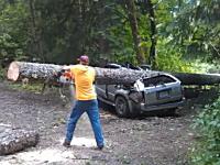 巨大な木が倒れてきて押し潰されてしまったハイラックスサーフの物語。