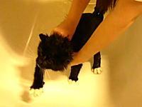 お風呂が嫌すぎて必死に脱出を図るネコのムービー。ちょっとかわいそうww