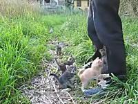 なにこれ可愛い(*´Д`)ご主人様の後ろに子猫+子猫+子猫+子猫+子猫+子猫