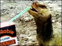 なんだコイツw紙パックからストローでオレンジジュースを飲むトカゲさんwww
