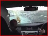 鳥がフロントガラスに衝突して「ビチャ」と潰れてしまう車載動画。再生注意