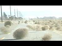 大量すぎるタンブル・ウィードに襲われた道路と竜巻状に回転する回転草