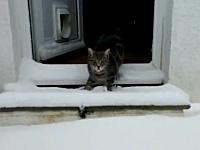 雪と黒猫。生まれて初めて雪と出会ったネコ。恐る恐る足を踏み出してみる。