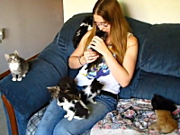 ほのぼの。子猫がたくさんいるご家庭の幸せな悩み事ビデオ。幸福の猫動