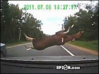 対向車に跳ね飛ばされた野生の鹿がフロントガラスを直撃する衝撃ドラレコ