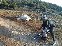 サイクリング中に偶然牛の出産現場に居合わせた男性が手助けしてあげる。