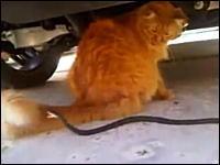 全力のヘビvsやる気のないネコ。そして最後はカメラに襲いかかるヘビヘビ動画
