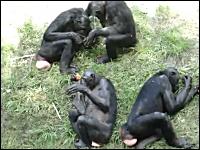 これは18禁。動物園のお猿さんのレズプレイが子供に見せられないレベル。