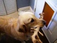 困った顔が可愛すぎるwww銜えている棒が引っかかって通れない犬www