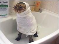 もふもふニャンコをお風呂に入れてみた ドライヤーにも動じない猫さんカワイイ