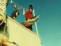 ふかひれの原料となる「ひれ」だけを切断して胴体は海へ捨てられるサメ・・・。