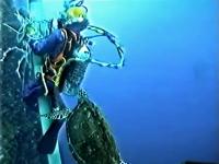 水中作業中のダイバーさんの元に人懐っこすぎるウミガメさんがやってきた。