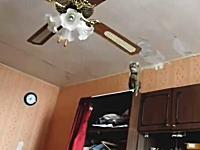 ネコネコ動画。そのに乗るのは無理だよ?という場所にジャンプしたいネコ