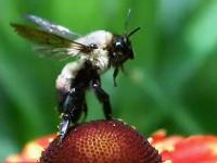 昆虫たちが飛び立つ瞬間の映像大会。蝶のふわっと感がとても(・∀・)イイ