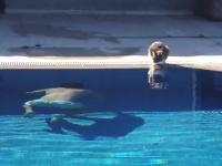 プールサイドにいるネコに潜水で近づいて驚かせてみた。これは酷いwww