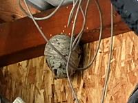 庭の物置小屋にできた大きな蜂の巣をエアガンで襲撃してみた動画。(海外)
