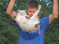 ネコを逆さまに落として「にゃんぱらりっ」の瞬間をスローモーションで見てみる