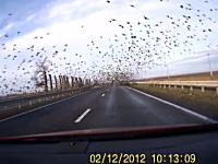 珍しい光景。ドライブしてたら目の前に大群の渦巻きが現れてウオーホホホ!