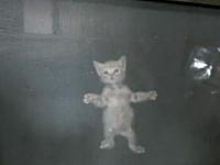 網戸を登る子ネコを内側から撮影したら可愛い動画。ミャー!「入れてよ!」