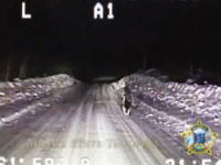 火事を警察に知らせて表彰された犬の行動 その一部始終を撮影したリアル映像
