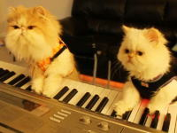 ピアノ猫 誰が見ても100%ブサイクだと思っちゃうけどかわええ(*´Д`)