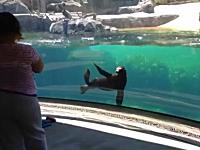ほのぼの。つまづいて転んだ女の子を心配そうに見つめる水槽の中のアシカ