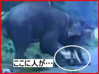 怒り狂った象が人を襲う衝撃映像 再生注意