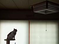 ネコはどじな生き物だ。ニャンコの失敗3つ。ファニーでキュートなネコネコ動画