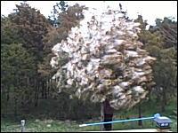 花粉の貯まった木を揺らしてみると!?これは凄い。花粉症のオレ嫌すぎw