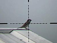 エアガンでスズメや鳩を狙撃する映像をスコープを覗いたハンター視点で。