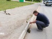 やさロシア。カモの親子の横断を助けた優しいロシア人男性と玉突き事故。