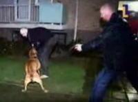 飼い主に噛み付いて離さないピットブルを射殺する警官