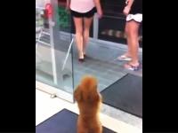 ファミマ店内でショートパンツのお姉さんを追う二足歩行のワンコが可愛い。