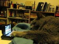 ネコネコ動画。ウルサイ!僕は眠いんだそっちにやっといて!これ邪魔だニャン