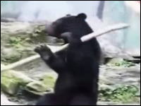 動物園の熊がバトントワリングしちゃう!可愛い!