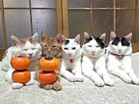 順番に手の上に柿を乗せられるのをじっと待つ猫たち。今日のほのぼの動画