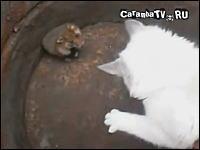 動物の世界でも先制攻撃はとても有効。ハムスターとネコを戦わせてみた。