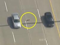心臓に悪い。高速道路を横断するアヒルの親子にドキドキしっぱなしな空撮。