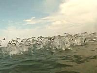 なにこれ凄い。海水浴客の目の前で何千という小魚の群れが大ジャンプ。